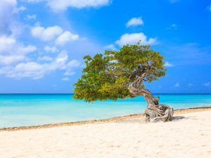 Everything You Need to Know about Aruba With Kids
